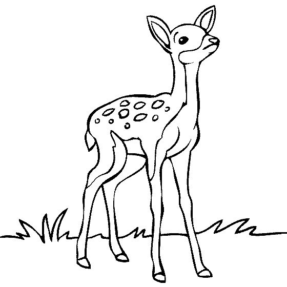 Coloring Pages Draw A Deer Throughout Baby Page