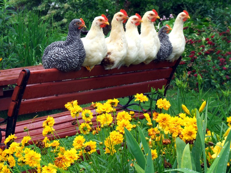 I guess our girls might enjoy a park bench in their coop...  ;)