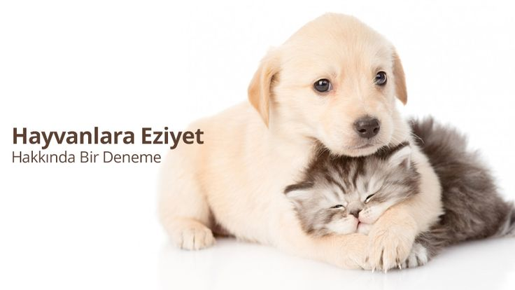 Hayvanlara Eziyet