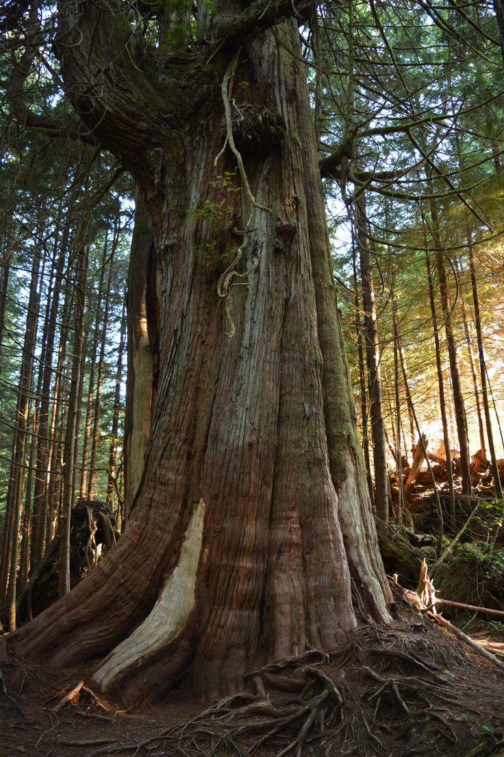 Rain Forest Pacific Rim National Park Vancouver Island, BC