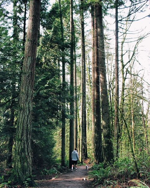 The Best Places to Hike within Portland City Limits. Washington Park and Forest Park are just a short distance from downtown, perfect excuse to get outdoors.