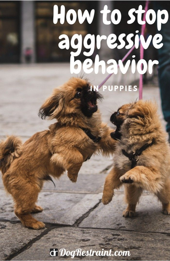 How To Stop Aggressive Behavior In Puppies Dog Clicker Training