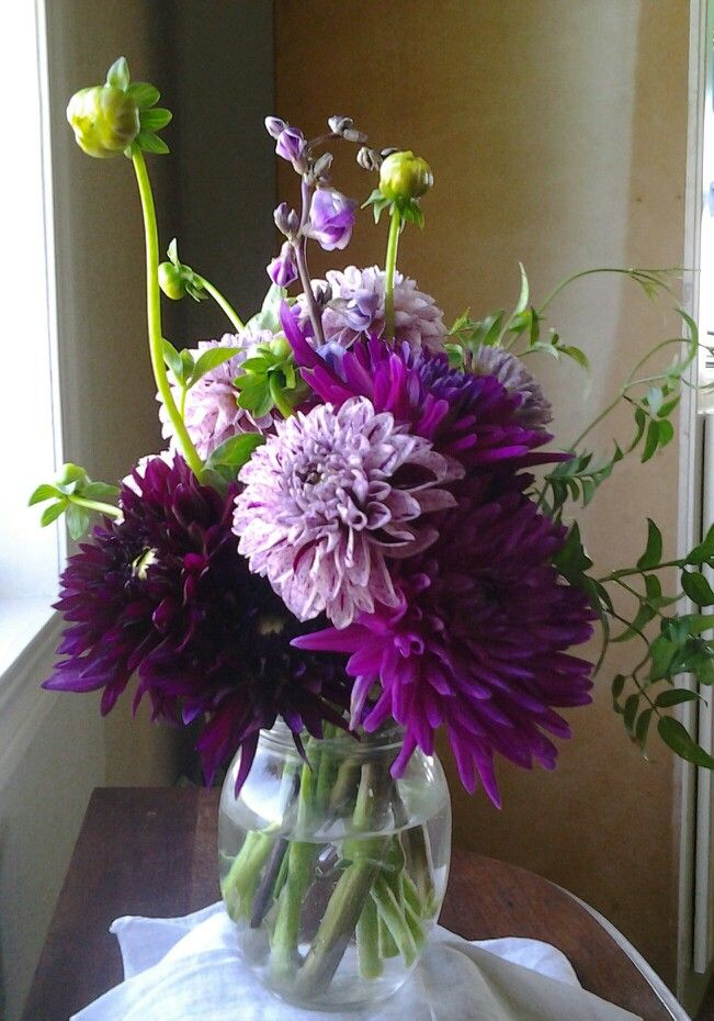 Dahlias ~ 'Imperial Wine, Pot Luck & Purple Gem'