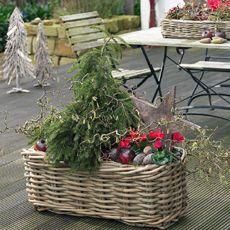 Beautiful Winterpflanzen f r Balkon und Terrasse So hat der Frost keine Chance