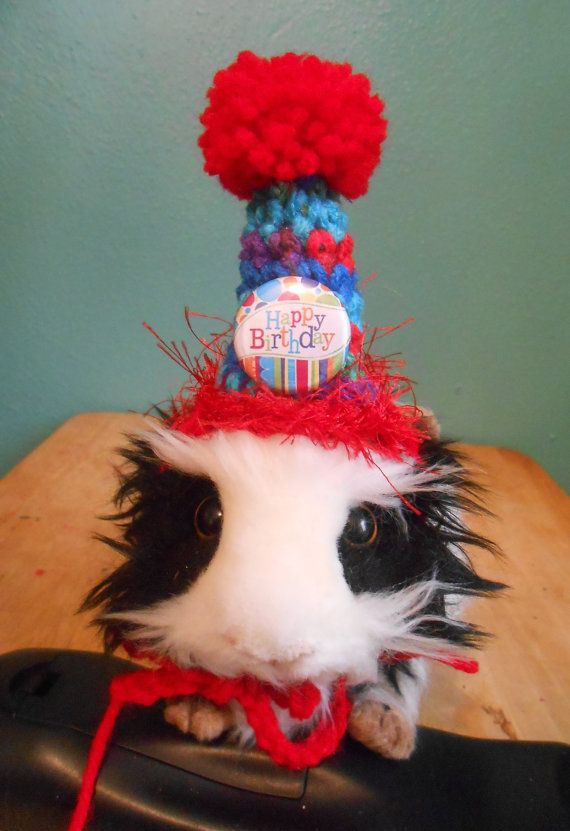 Guinea pig Birthday Hat Guinea Pig Clothes, Bearded Dragon Birthday Party Hat…