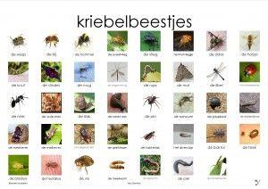 super handige plaatjes voor woordenschat, allerlei thema's