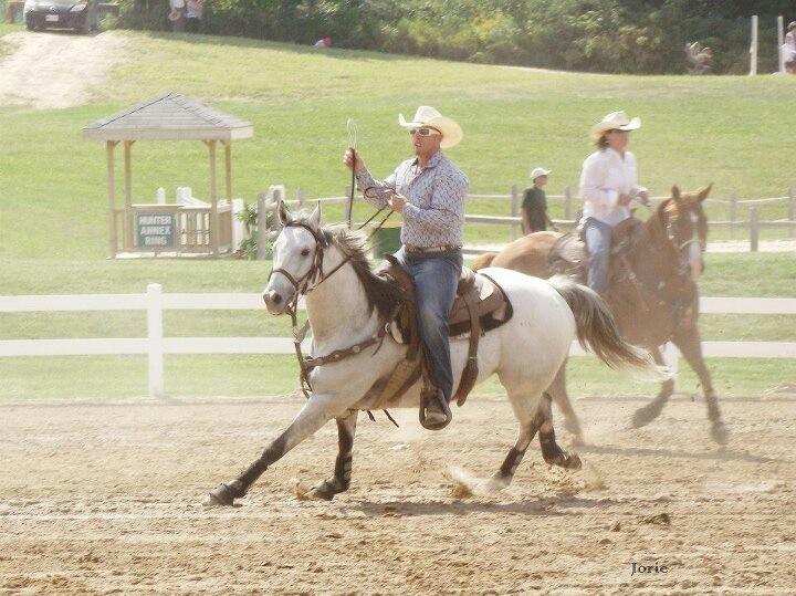 Horse, rodeo, grey, cowboy
