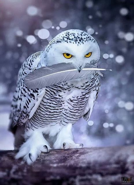 Owl & His Prize Feather by rachidmiliani1 on Flickr