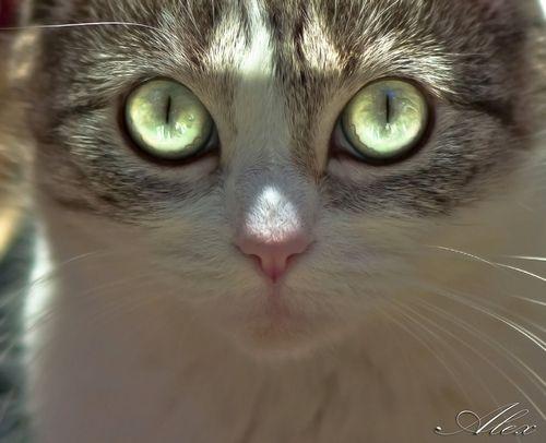 Gatos e outros bichos | ¡¡Ups!!,me he tragado una linterna… (by...