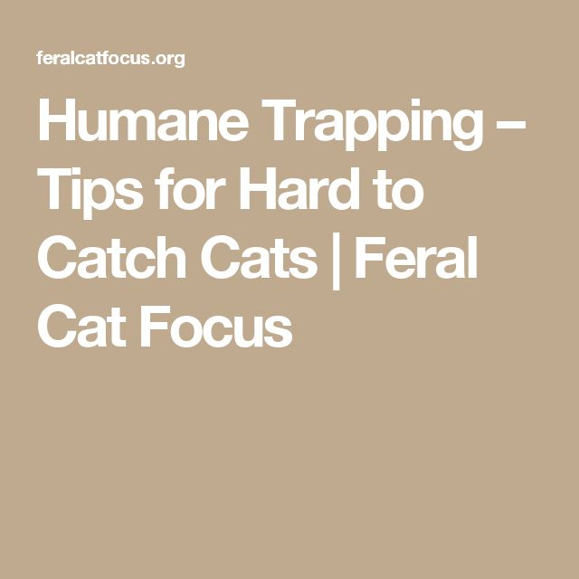 Humane Trapping – Tips for Hard to Catch Cats | Feral Cat Focus