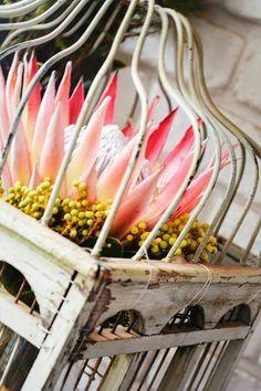 Protea in birdcage