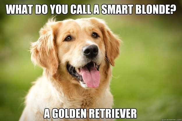 Golden Retrievers are smart blondes!