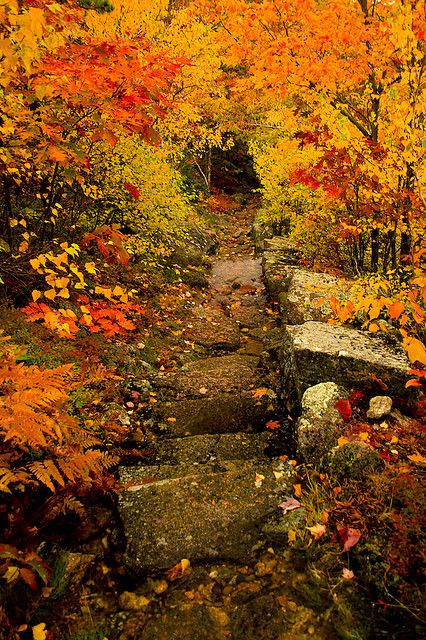 Acadia, Maine- simply gorgeous Autumn colors!  I could tat away for hours here.Acadia National Parks, Mountain Trail, Fall Leaves, Paths, Maine, Nature, Autumn, Beautiful, Places