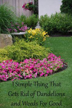 53 Best Nursery Sun Grasses Images On Pinterest