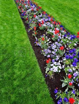 Nagy kert különböző frissen növesztett virágok és zöld photo