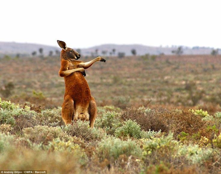 Самые смешные фотографии животных на конкурсе Comedy Wildlife Photography Awards 2017 • НОВОСТИ В ФОТОГРАФИЯХ