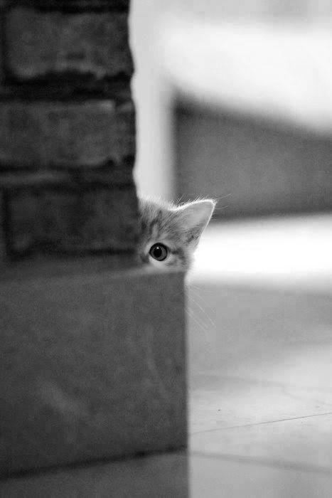 Cute hiding kitten