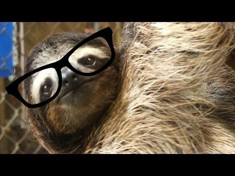 6 Advice From A Sloth On School You