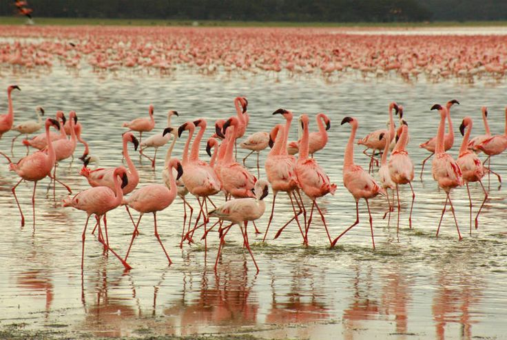 Visit the beautiful Lake Nakuru i Kenya! http://www.wunderbird.com/safari/rejser_til_kenya