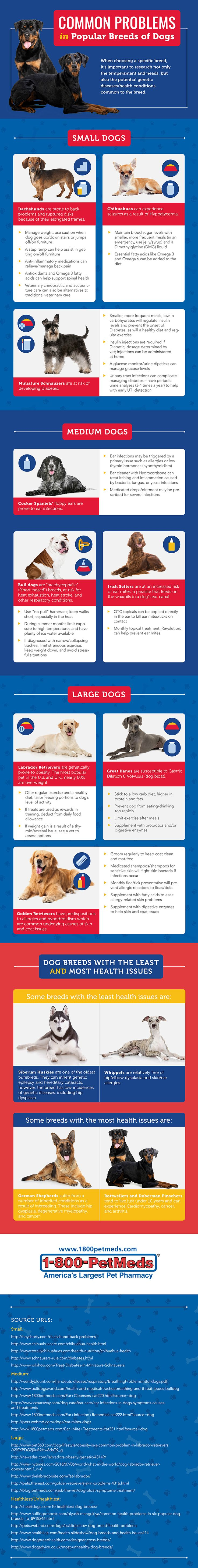 Common Health Problems in Popular Dog Breeds Infographic