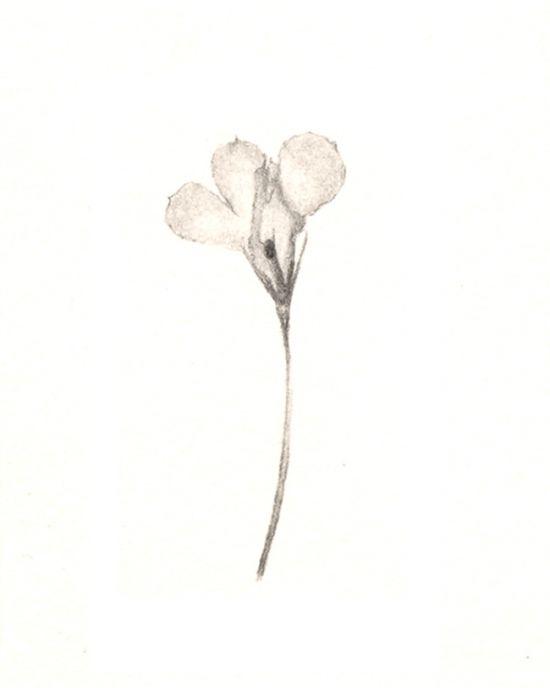 Curlicues No.4