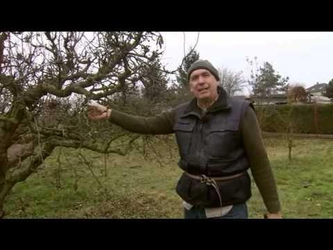 Rez ovocných stromov jar - YouTube
