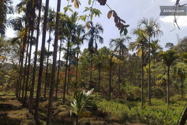 Laxmi Estate in Madikeri