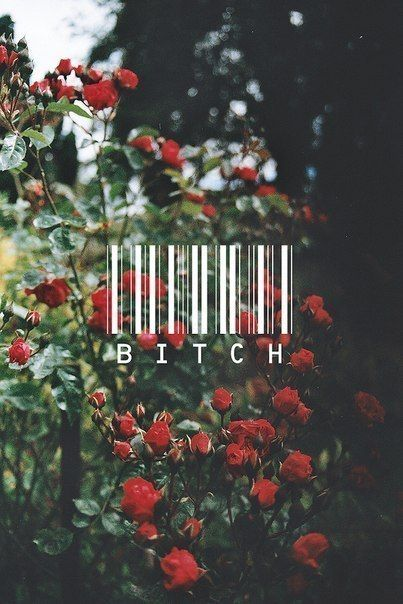 bitch - Words Over Pixels - Daily Inspiration