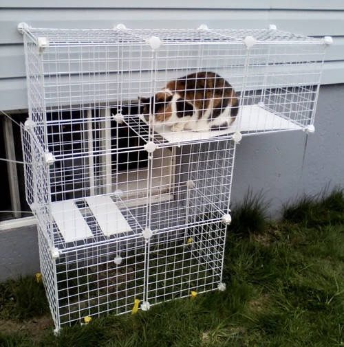 Diy Cat outdoor space