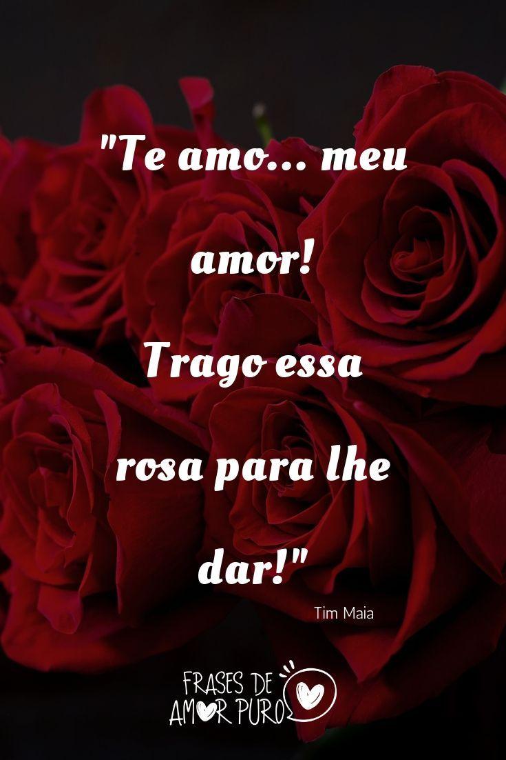 Trago Essa Rosa Para Lhe Dar Rosas Frases De Amor Frases
