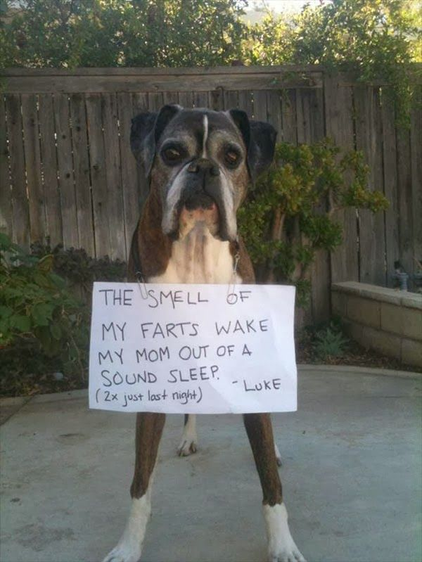 My boxer does this...... it smells like rotten pot roast