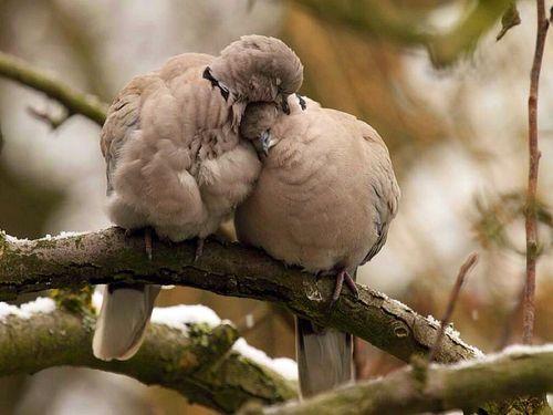 Imagem de bird