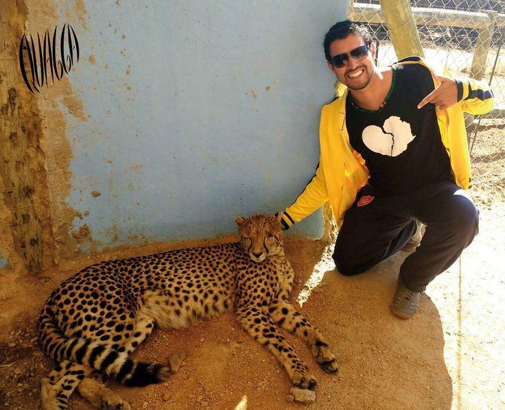 Quagga en Lion&Safari Park. Johanesburgo. Sudáfrica. #quagga.
