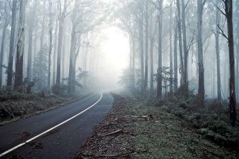 #Misty #Drive Through the #Forrest #Road #creepy #scary #halloween #dark #morning #story #fog #creative #horror #horrormovie