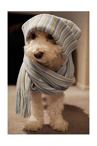 Scarf dog .. how cute ! I want a puppy ... Some day