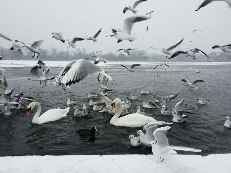 London Kensington Park in the snow, January 2013, by Virginie Alix