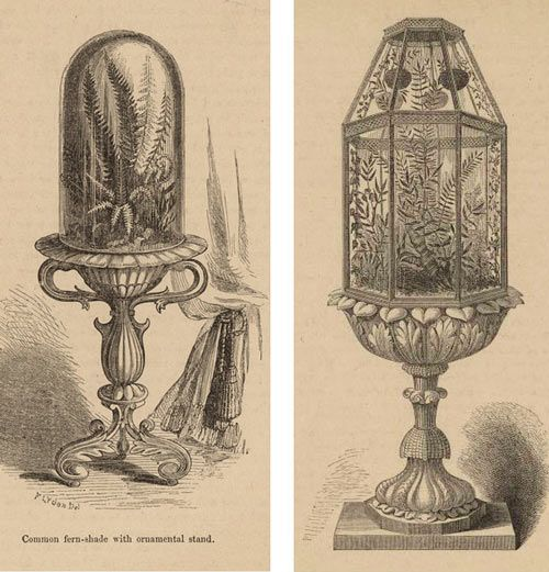 Images from left: Common Fern-Shade with Ornamental Stand and Terrarium with Ferns and Ivy, 1870s, from the New York Public Library