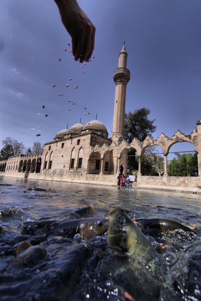 The legendary Pool of Sacred Fish (Balikligol) where Abraham was thrown into the fire by Nimrod. The pool is in the courtyard of the mosque of Halil-ur-Rahman, built by the Ayyubids in 1211 and now surrounded by attractive gardens designed by architect Merih Karaaslan. The courtyard is where the fishes thrive. A local legend says seeing a white fish will open the door to the heavens. Balıklı Göl / Şanlıurfa