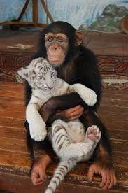 Bildergebnis für animal odd couples