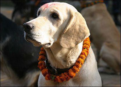 Nem is lehet nem tisztelni! Kukur Tihar , Nepál  #kutya #dog #kukurtihar #kutyabaráthelyek