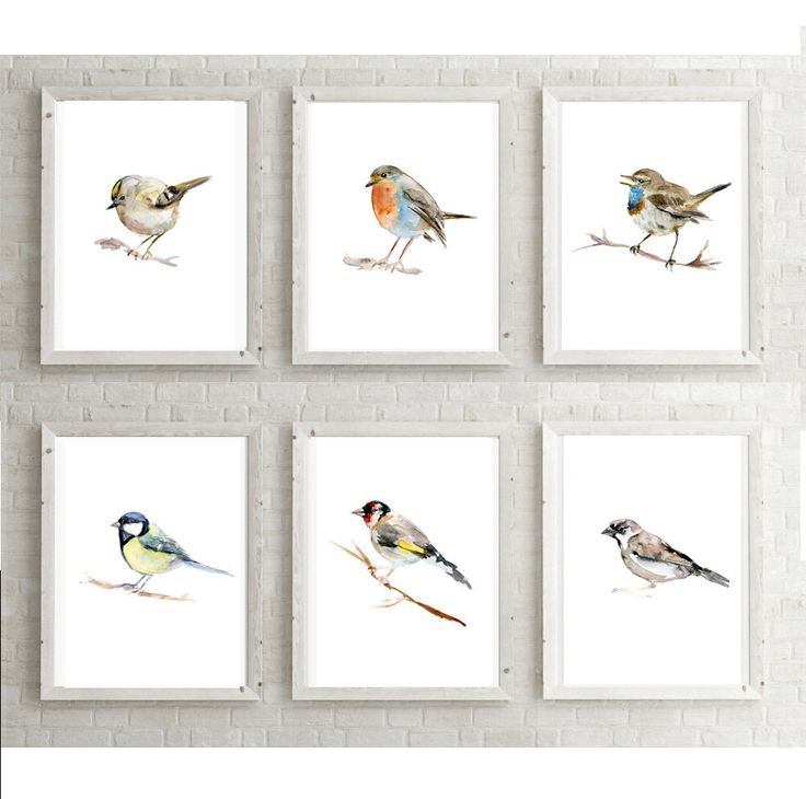 Set of 6 Birds set - birds watercolors  - Art prints - Gold Crest - sparrow - Bluethroat - bluetit - Robin drawing - animal painting -  by Zendrawing on Etsy https://www.etsy.com/listing/263539977/set-of-6-birds-set-birds-watercolors-art