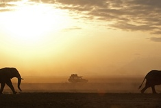 Passage To Africa - Amboseli - Kenya #Elephants #Sunset