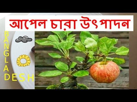 How to Plant Apple Seeds in a Pot - YouTube