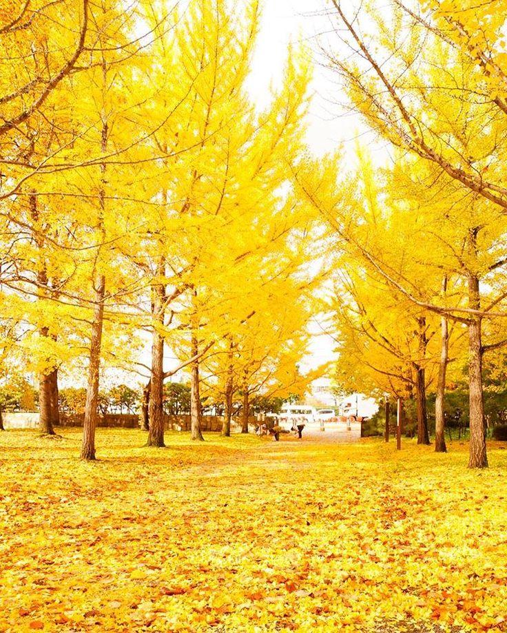 Yamagata Prefectural General Sports Park, Tendo, Yamagata, Japan. Follow my pinterest: rckeyru #rckeyru #rckey #rckeypn