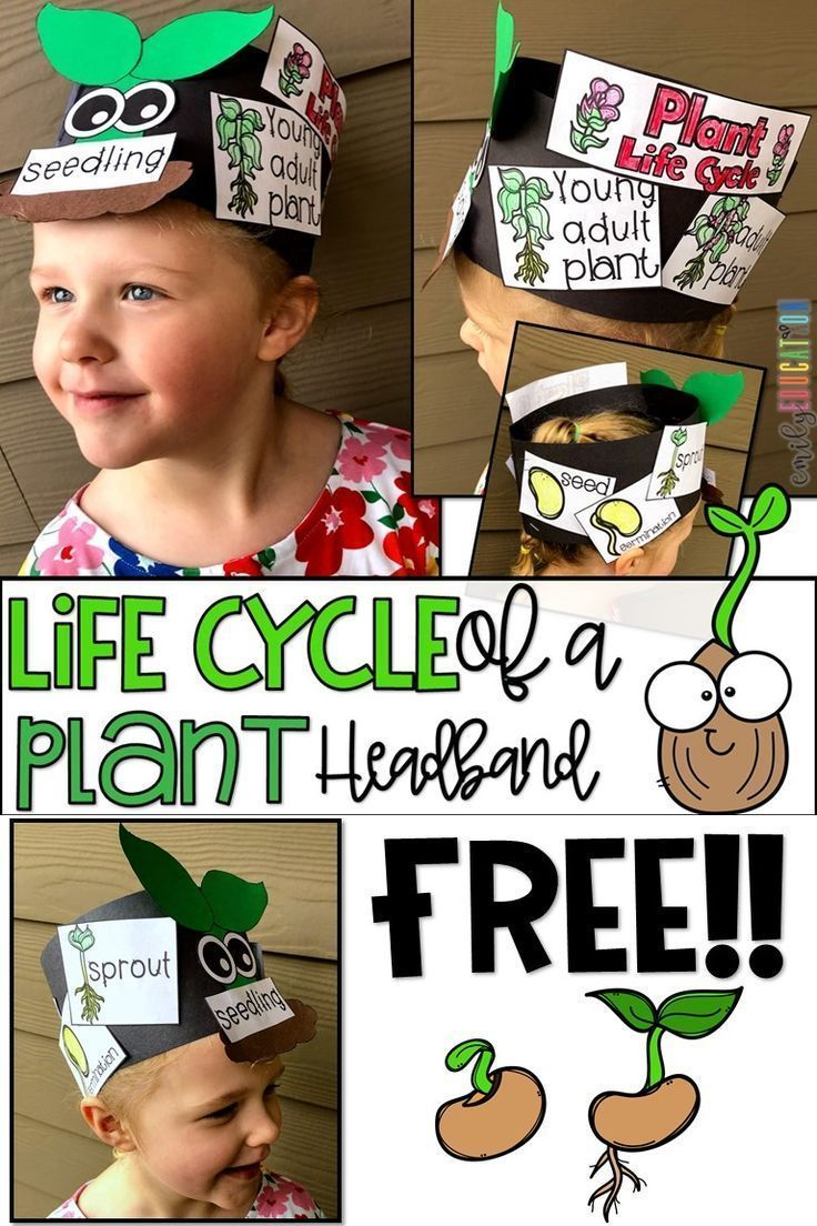 Plant Books And Activities For Kids Emily Education Plant Life Cycle Plants Life Cycle Activities Plant Life Cycles Kindergarten [ 1104 x 736 Pixel ]