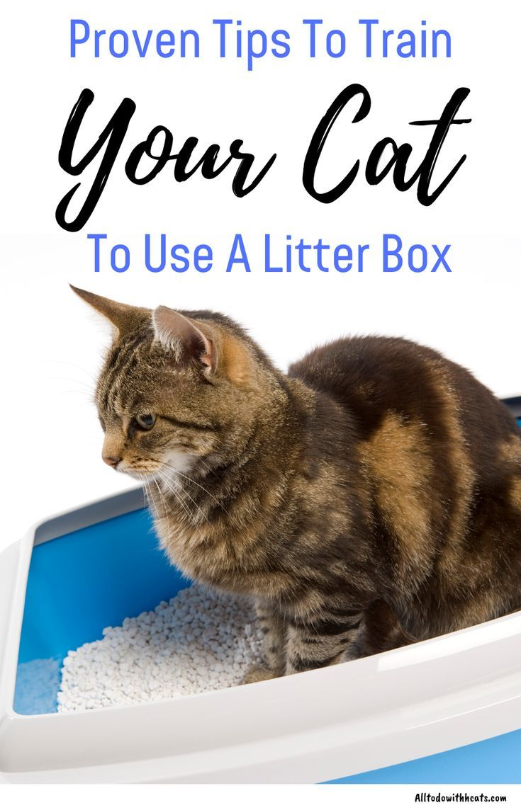 How To Train Your Cat To Use A Litter Box Easily All To Do With Cats In 2020 Cat Training Litter Box Natural Cat Litter Clay Cat Litter