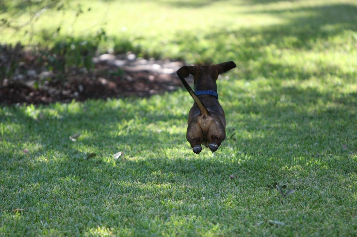 It's a bird . . . It's a plane! No! It's Wonder Dog! Foto Friday Dogs at Play.