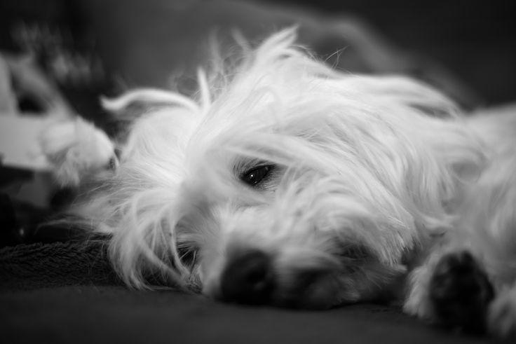Yeah, I`m a dog... by Luboš Dufek on 500px