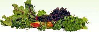 Healthy gallbladder foods/diet. natalieshill lettiecbn zellasdg