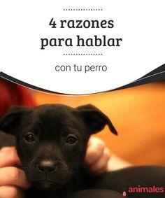 4 razones para hablar con tu perro  No te sientas culpable, todo apunta a que conversar con tu perro establece vínculos más fuertes con él. Te damos 4 razones para hablar con tu perro. #hablar #perro #consejos #vínculo